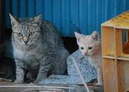 ノラ猫・地域猫活動